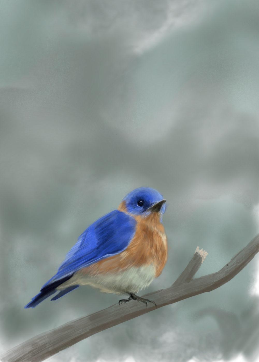 Illustration digitale d'un merle bleu sur une branche